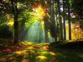sunrise-forest-wallpaper-2